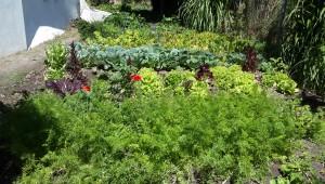 The Novalis Permiculture Garden